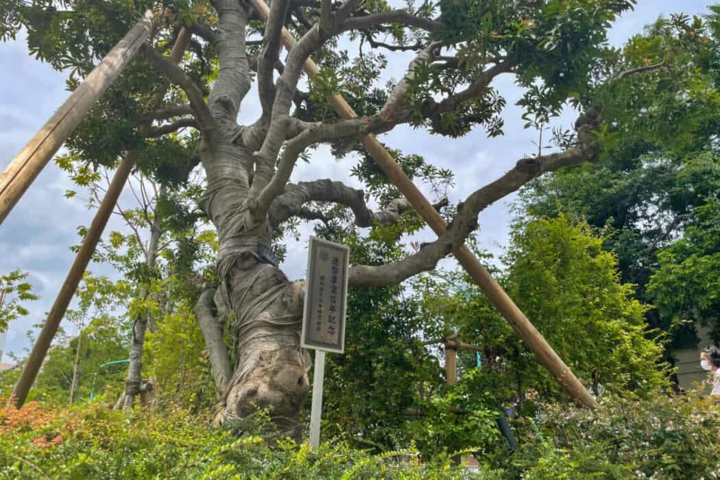 イケ・サンパーク 記念樹